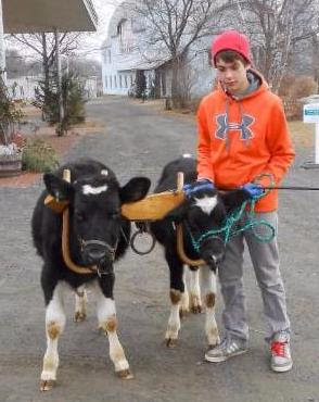 Caleb-and-Oxen